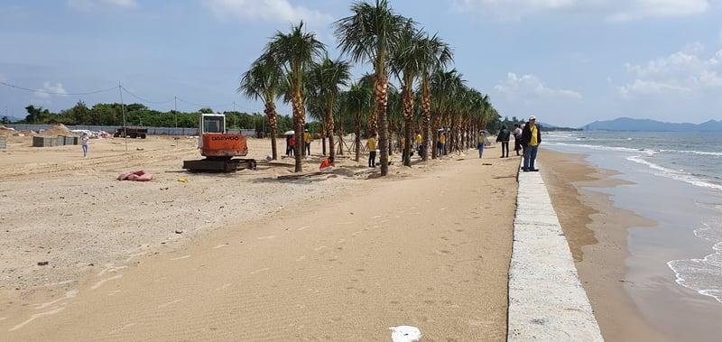 Hàng cây ngoài biển The Maris Vũng Tàu
